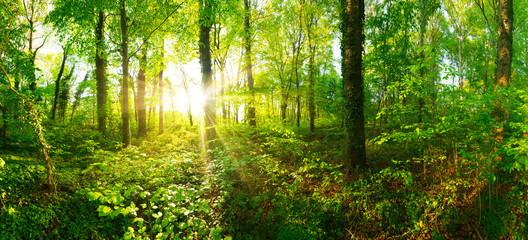 Wald Panorama mit goldenem Sonnenschein