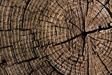 Deep cracked stump.