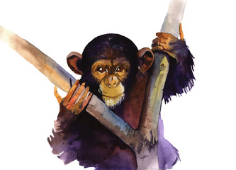 watercolor monkey
