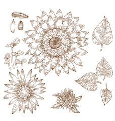 Sunflower graphic elements.
