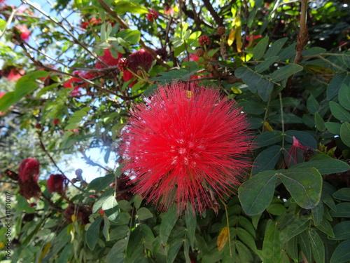 Boule De Fleur Rouge Stock Photo And Royalty Free Images On Fotolia
