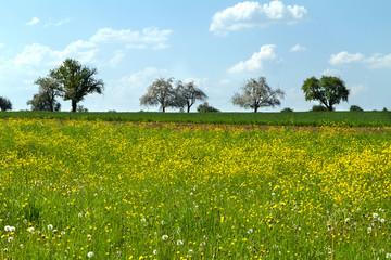 Frühling in Mähringen