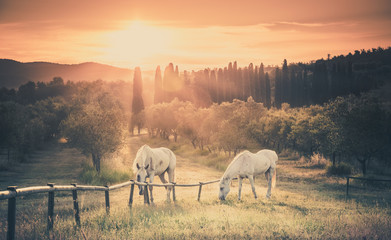 Wild horses and tuscan sunrise