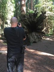 Man photographs fallen redwood