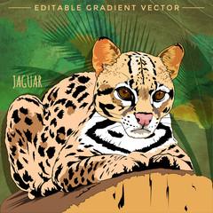 Wild Cats. Jaguar