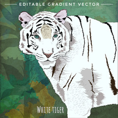 Wild Cats. White Tiger