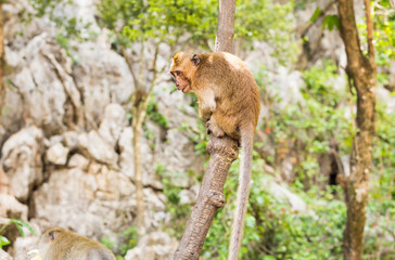 Funny monkey in a natural forest.