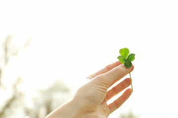 Female hand holding clover leaf on sky background