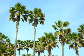 Palmen, Mallorca
