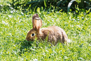 Beautiful rabbit in green grass, easter bunny