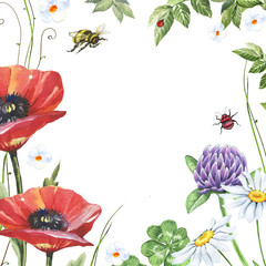 Watercolor floral frame with poppies, clover, chamomiles, beetle and bee isolated on white