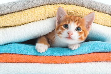 Kitten lying on towels