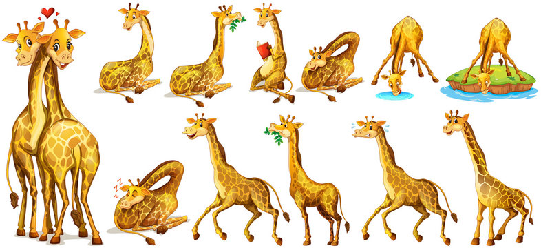 Set of giraffe in different actions