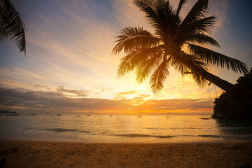 Palm tree leaves over sunset
