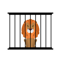 Lion in zoo cage. Strong Scary wild animals in captivity. Big ha