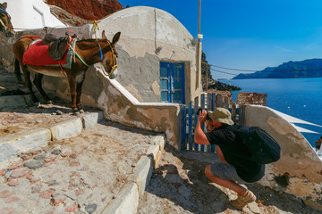 Photographer traveler takes pictures donkey in Old port Amoudi of Oia village at Santorini island in Aegean sea, Greece