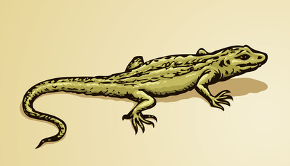 Lizard. Vector drawing