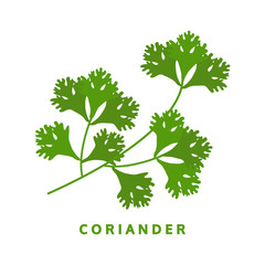 coriander herb, chinese parsley, food vector illustration, isola