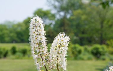 庭園に咲く白い花