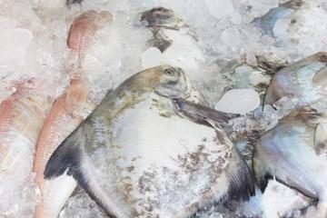 Fresh freeze pompano fish in ice tank.
