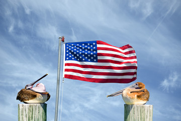 Pelican and American Flag