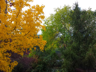 Trees in autumn with yellow tones and blue sky