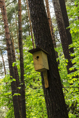 birdhouse on the tree