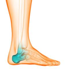 Human Body Bone Joint Pains