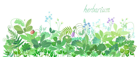 The background image of meadow flowers and herbs