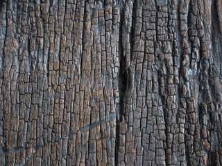 old wood Abstract background