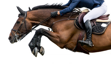 Foto op Plexiglas Paardrijden Horse Jumping, Equestrian Sports, Isolated on White Background