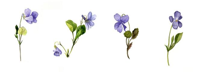 watercolor blue wild flowers