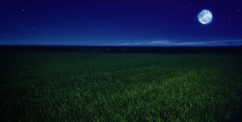 Keuken foto achterwand Nacht moonlit night in wheat field