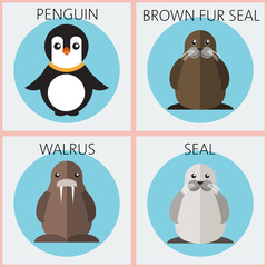 Abstract illustration with colored sea animals set in round frames, a penguin, walrus, brown fur walrus and seal, over a white background. Digital vector image.