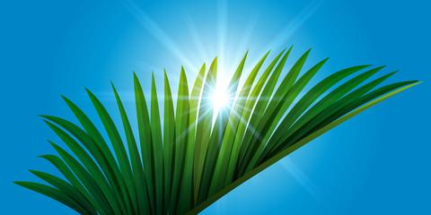 Feuille de palmier - soleil