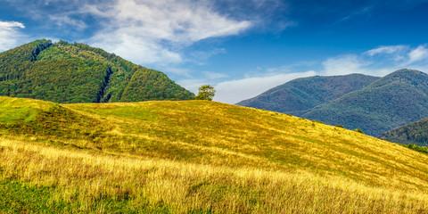 rural field near forest at hillside