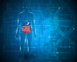 Bowels and stomach abstract scientific background