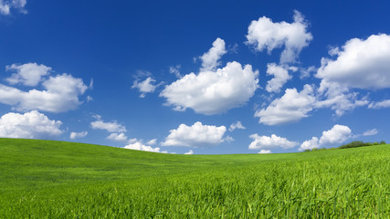 Spring field of grass with clouds