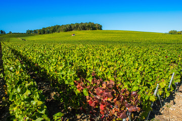 Viviers sur Artaut, Champagne vineyards in the Cote des Bar area of the Aube departm