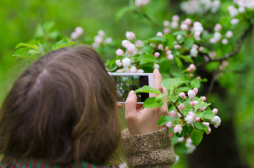 Girl making photo of branch with little beautiful white apple fl