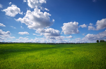 Green field and blue sky. Beatiful green field with blue sky.
