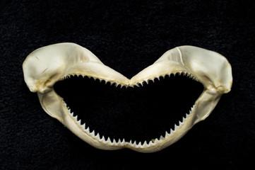 Scary Shark Teeth