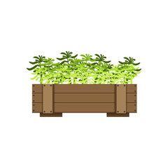 Plants In A Wooden Crate