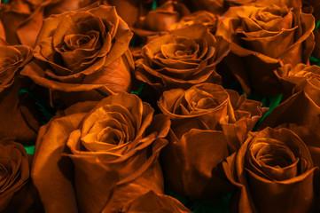 festive bouquet roses close-up. gold rose.