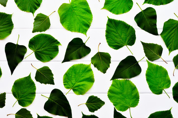 Leaf background. A variety of tree leaves on the wooden background whiteboard