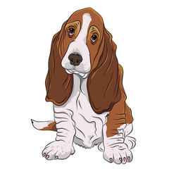 basset hound puppy realistic vector illustration isolated