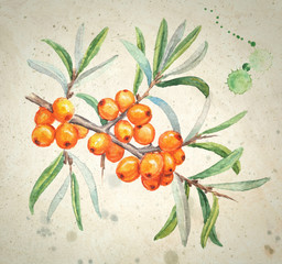 Watercolor realistic paintings - sea buckthorns branch. Bright yellow berries with green leaves isolated on vintage textured background.