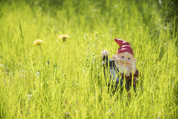 garden gnome standing in the grass