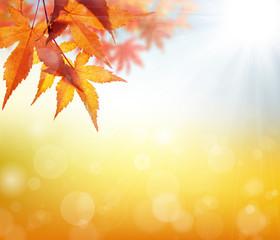秋,背景,紅葉,もみじ,葉,爽やか,美しい,光,輝き,10月,日本,バックグラウンド,赤い,11月,イメージ,風景