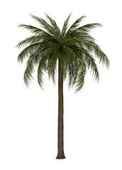 Illustration of palm tree